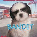 [PDF] [EPUB] Bandit (The Puppy Place, #24) Download