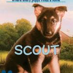 [PDF] [EPUB] Scout (The Puppy Place, #7) Download