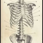 [PDF] [EPUB] The Skeleton Melodies Download