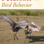[PDF] [EPUB] Peterson Reference Guide to Bird Behavior Download
